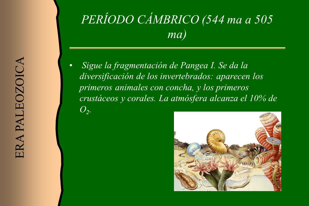 PERÍODO CÁMBRICO (544 ma a 505 ma) Sigue la fragmentación de Pangea I. Se da la diversificación de los invertebrados: aparecen los primeros animales c