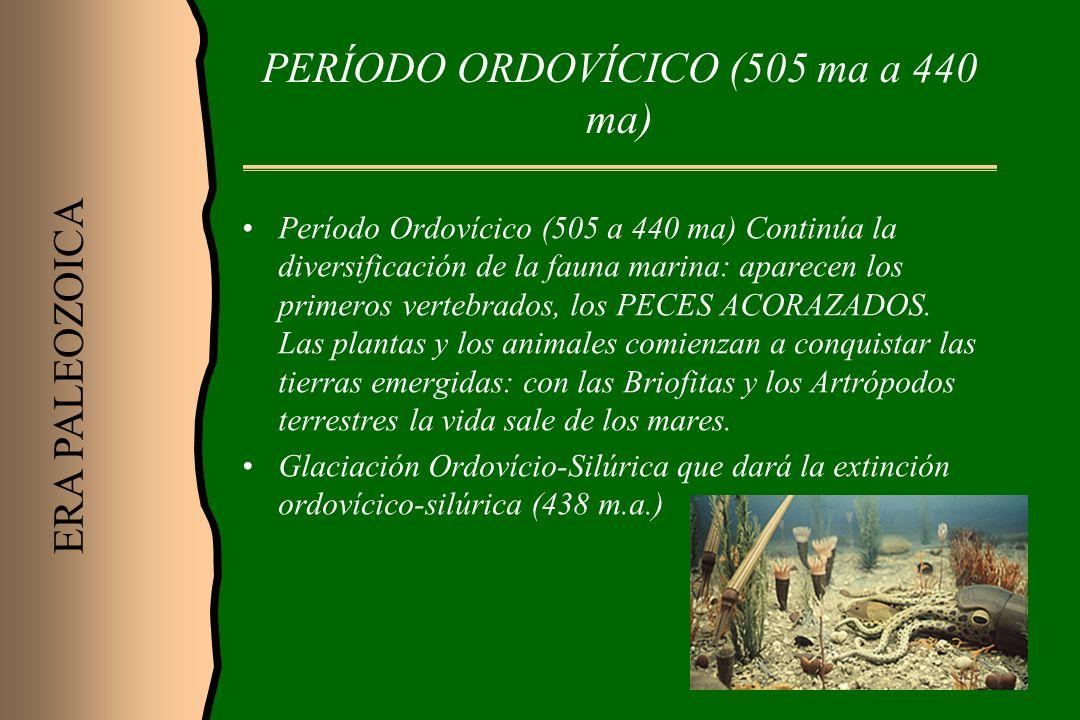PERÍODO ORDOVÍCICO (505 ma a 440 ma) Período Ordovícico (505 a 440 ma) Continúa la diversificación de la fauna marina: aparecen los primeros vertebrad