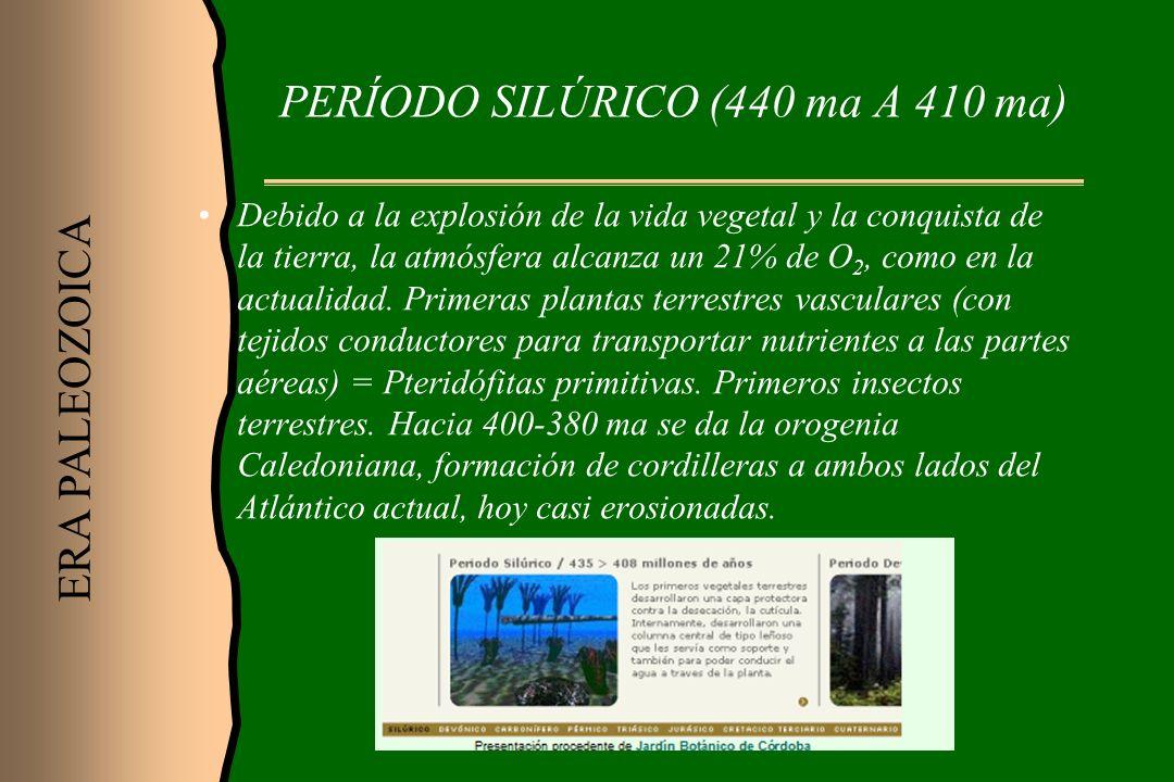 PERÍODO SILÚRICO (440 ma A 410 ma) Debido a la explosión de la vida vegetal y la conquista de la tierra, la atmósfera alcanza un 21% de O 2, como en l