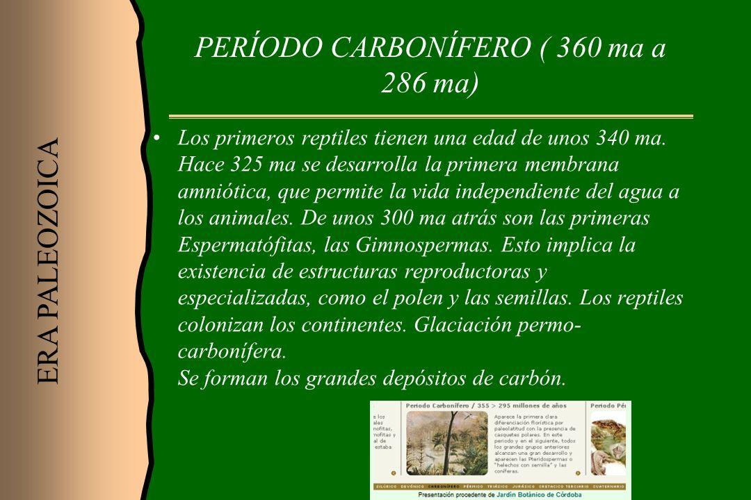 PERÍODO CARBONÍFERO ( 360 ma a 286 ma) Los primeros reptiles tienen una edad de unos 340 ma. Hace 325 ma se desarrolla la primera membrana amniótica,