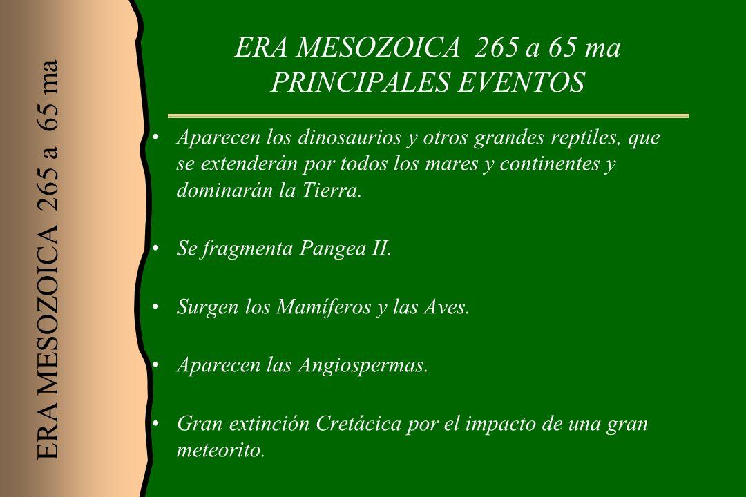 ERA MESOZOICA 265 a 65 ma PRINCIPALES EVENTOS Aparecen los dinosaurios y otros grandes reptiles, que se extenderán por todos los mares y continentes y