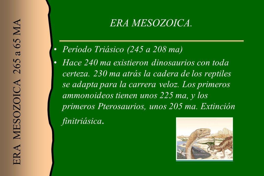 ERA MESOZOICA. Período Triásico (245 a 208 ma) Hace 240 ma existieron dinosaurios con toda certeza. 230 ma atrás la cadera de los reptiles se adapta p