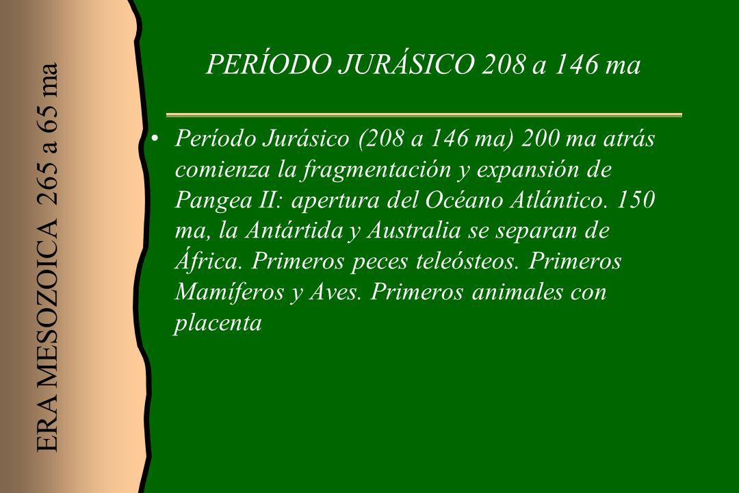 PERÍODO JURÁSICO 208 a 146 ma Período Jurásico (208 a 146 ma) 200 ma atrás comienza la fragmentación y expansión de Pangea II: apertura del Océano Atl
