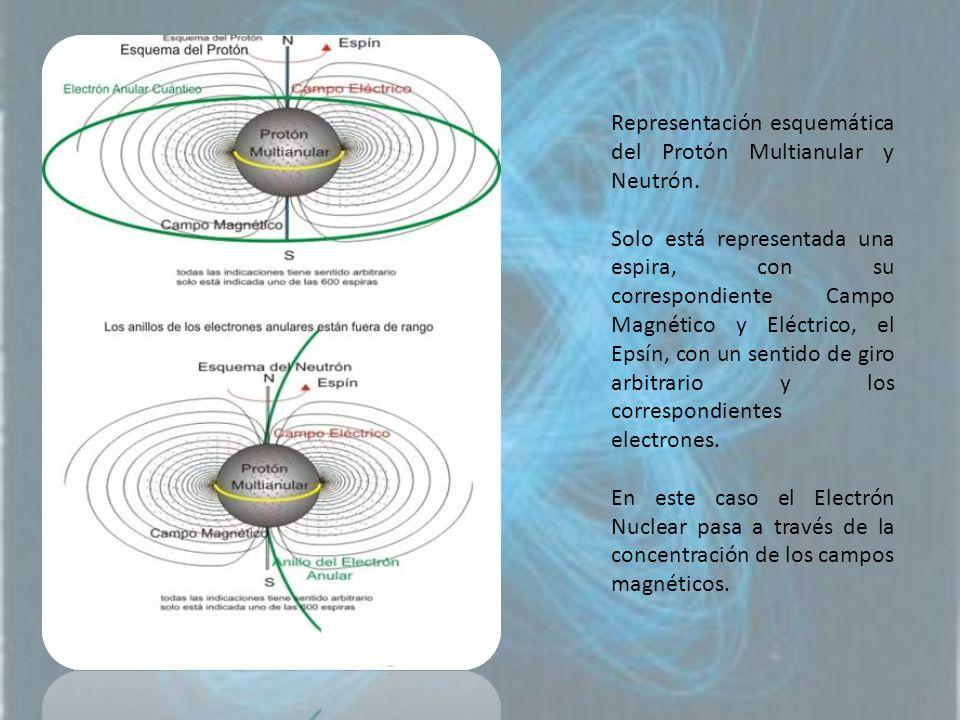 Representación esquemática del Protón Multianular y Neutrón. Solo está representada una espira, con su correspondiente Campo Magnético y Eléctrico, el