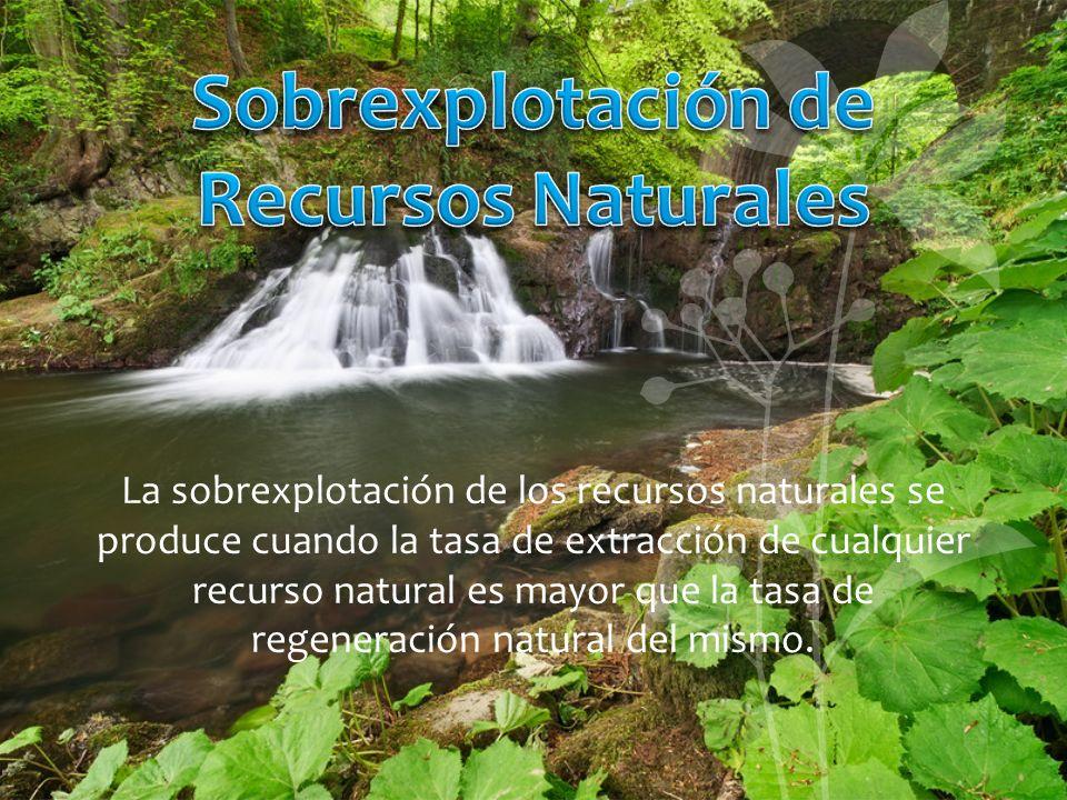 La sobrexplotación de los recursos naturales se produce cuando la tasa de extracción de cualquier recurso natural es mayor que la tasa de regeneración