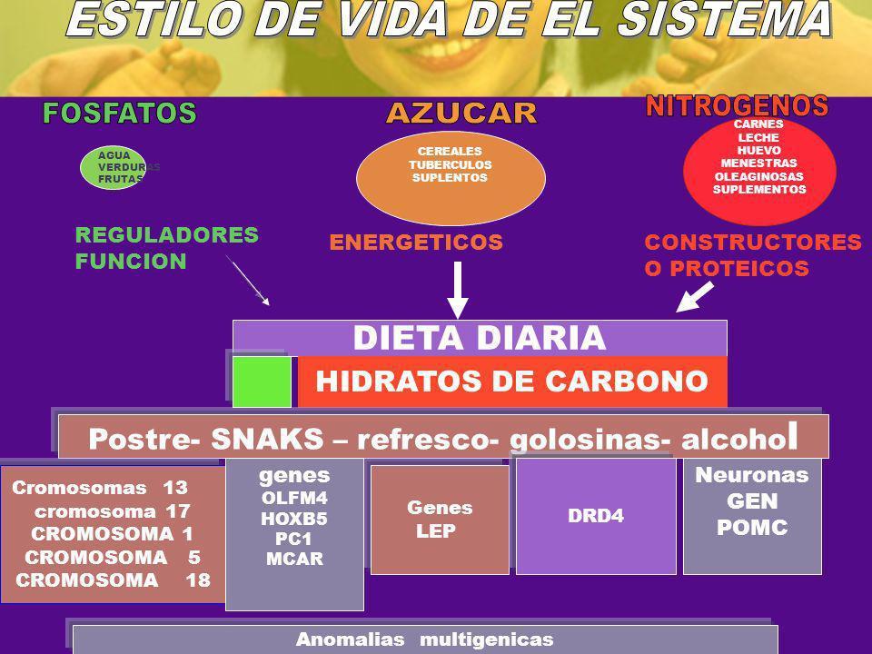 AGUA VERDURAS FRUTAS CEREALES TUBERCULOS SUPLENTOS CARNES LECHE HUEVO MENESTRAS OLEAGINOSAS SUPLEMENTOS REGULADORES FUNCION ENERGETICOSCONSTRUCTORES O