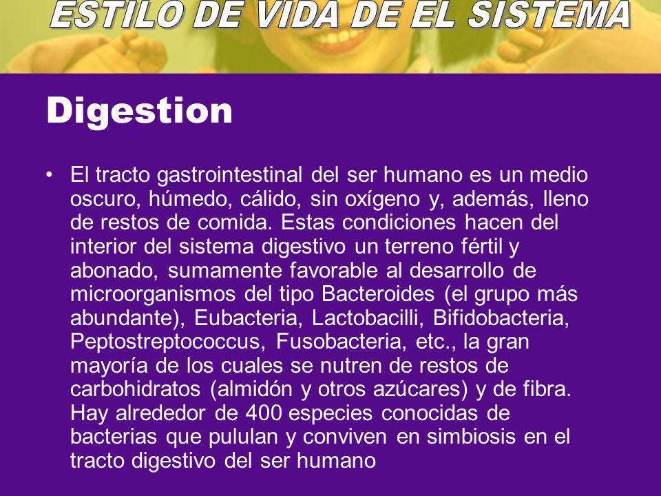 Digestion El tracto gastrointestinal del ser humano es un medio oscuro, húmedo, cálido, sin oxígeno y, además, lleno de restos de comida. Estas condic