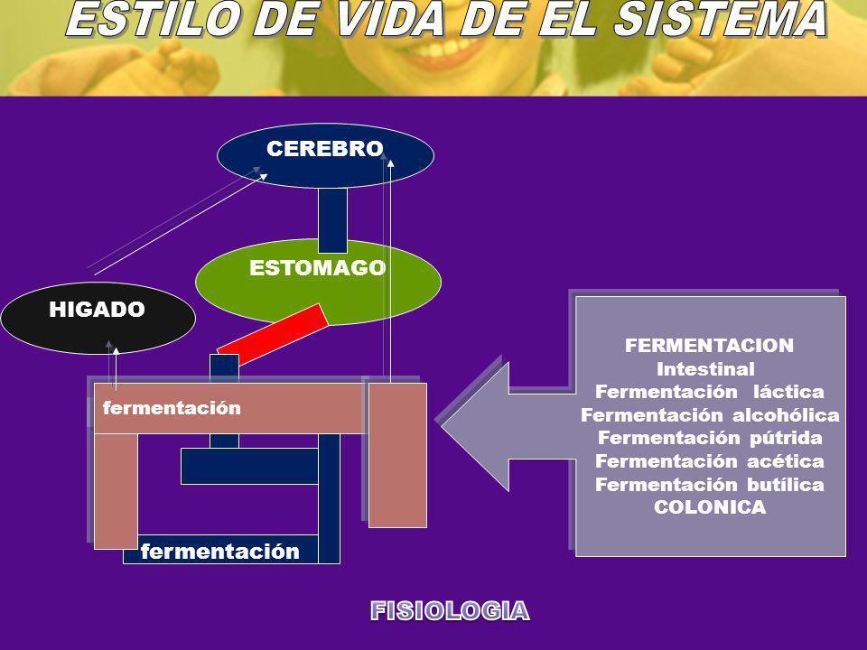 CEREBRO ESTOMAGO HIGADO fermentación FERMENTACION Intestinal Fermentación láctica Fermentación alcohólica Fermentación pútrida Fermentación acética Fe