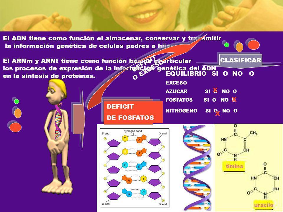 El ADN tiene como función el almacenar, conservar y transmitir la información genética de celulas padres a hijas. El ARNm y ARNt tiene como función bá