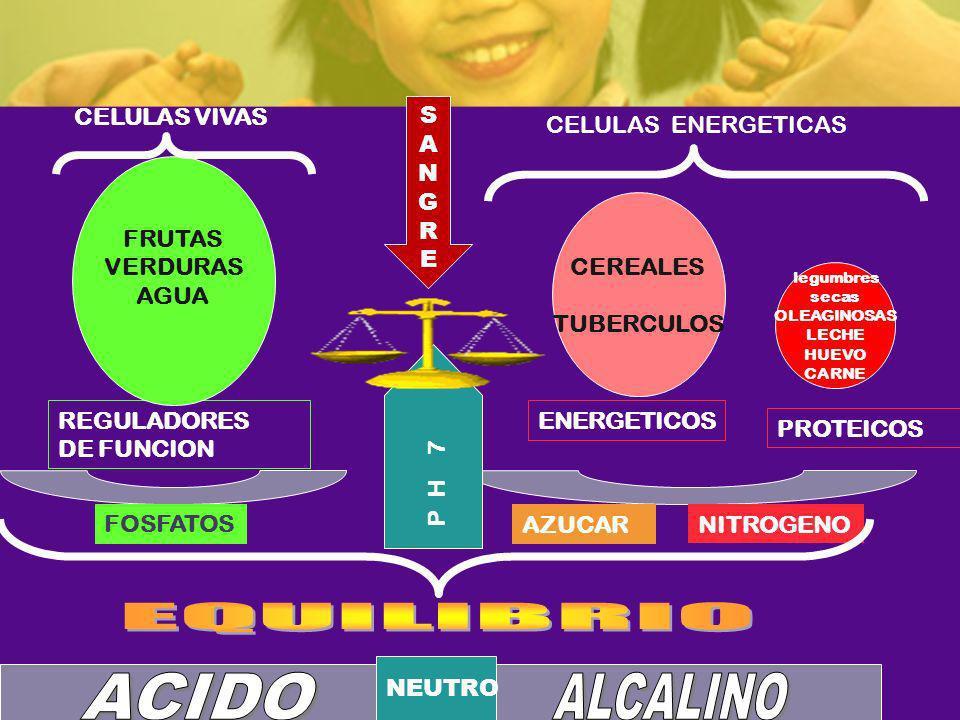 REGULADORES DE FUNCION FRUTAS VERDURAS AGUA CEREALES TUBERCULOS ENERGETICOS PROTEICOS CELULAS VIVAS CELULAS ENERGETICAS FOSFATOS P H 7 NITROGENO legum