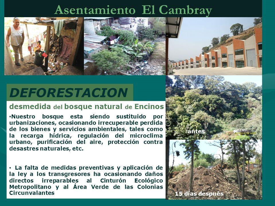 Asentamiento El Cambray DEFORESTACION desmedida del bosque natural de Encinos Nuestro bosque esta siendo sustituido por urbanizaciones, ocasionando ir