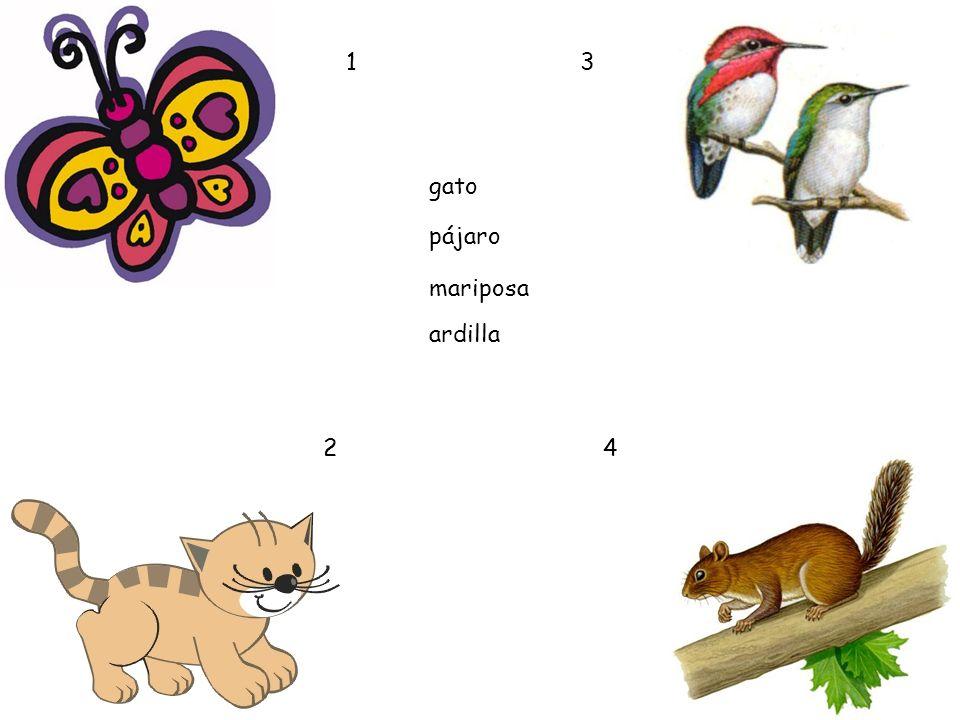1 2 3 4 gato pájaro mariposa ardilla