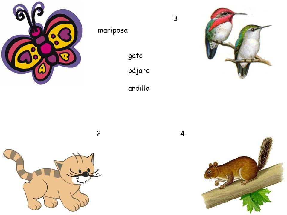 2 3 4 gato pájaro mariposa ardilla