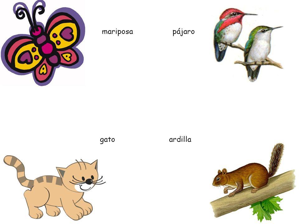 gato pájaro mariposa ardilla