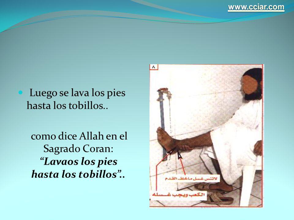 Luego se lava los pies hasta los tobillos.. como dice Allah en el Sagrado Coran: Lavaos los pies hasta los tobillos..