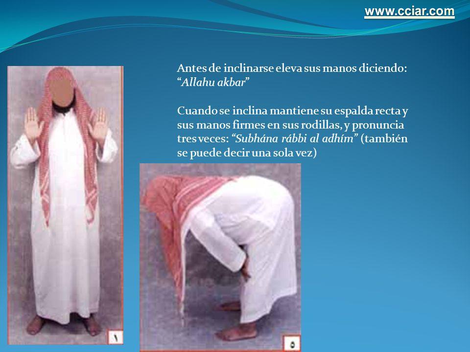 Antes de inclinarse eleva sus manos diciendo:Allahu akbar Cuando se inclina mantiene su espalda recta y sus manos firmes en sus rodillas, y pronuncia