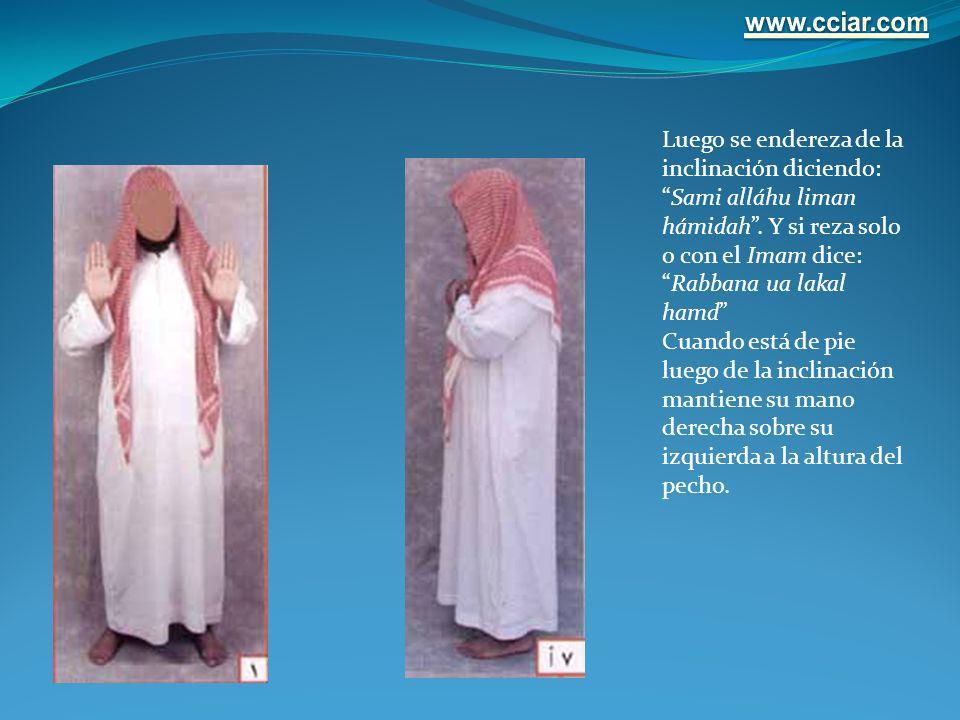 Luego se endereza de la inclinación diciendo:Sami alláhu liman hámidah. Y si reza solo o con el Imam dice:Rabbana ua lakal hamd Cuando está de pie lue