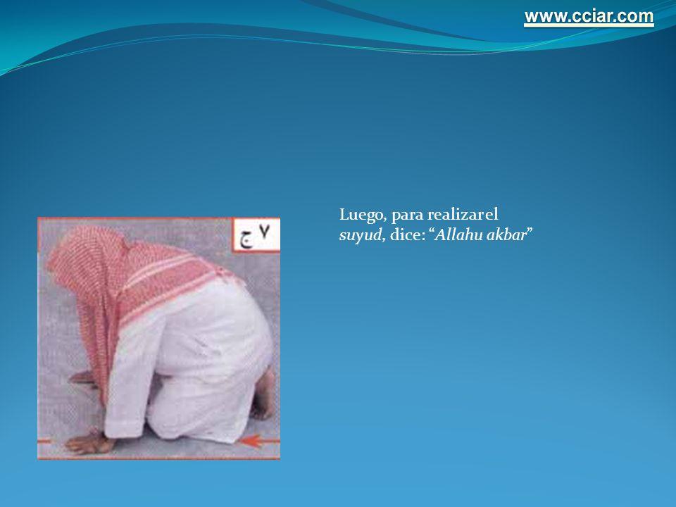 Luego, para realizar el suyud, dice: Allahu akbar