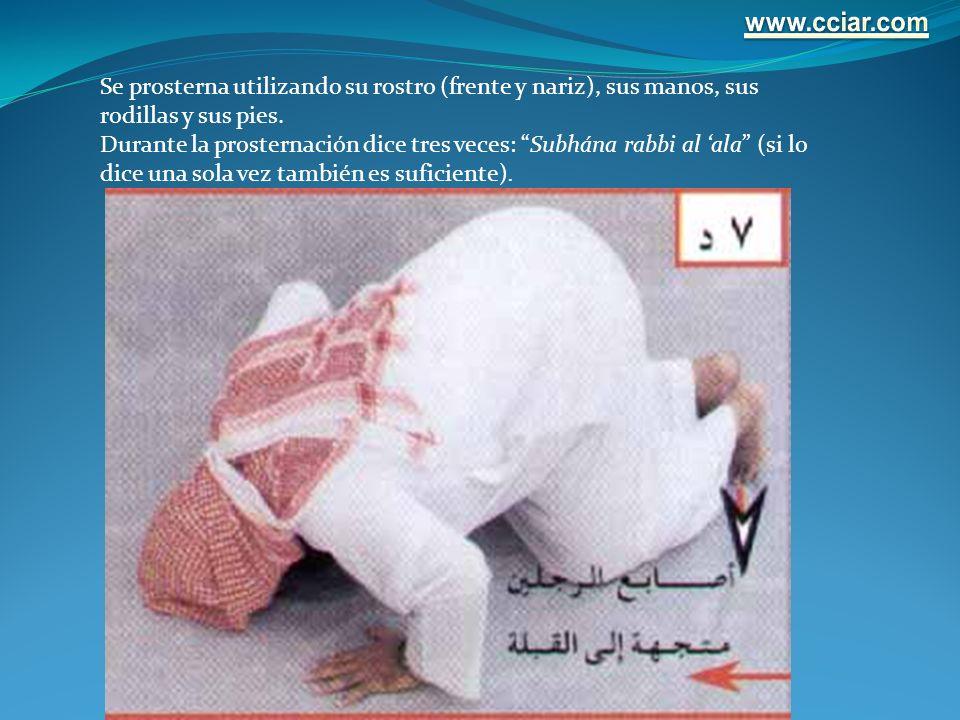 Se prosterna utilizando su rostro (frente y nariz), sus manos, sus rodillas y sus pies. Durante la prosternación dice tres veces: Subhána rabbi al ala
