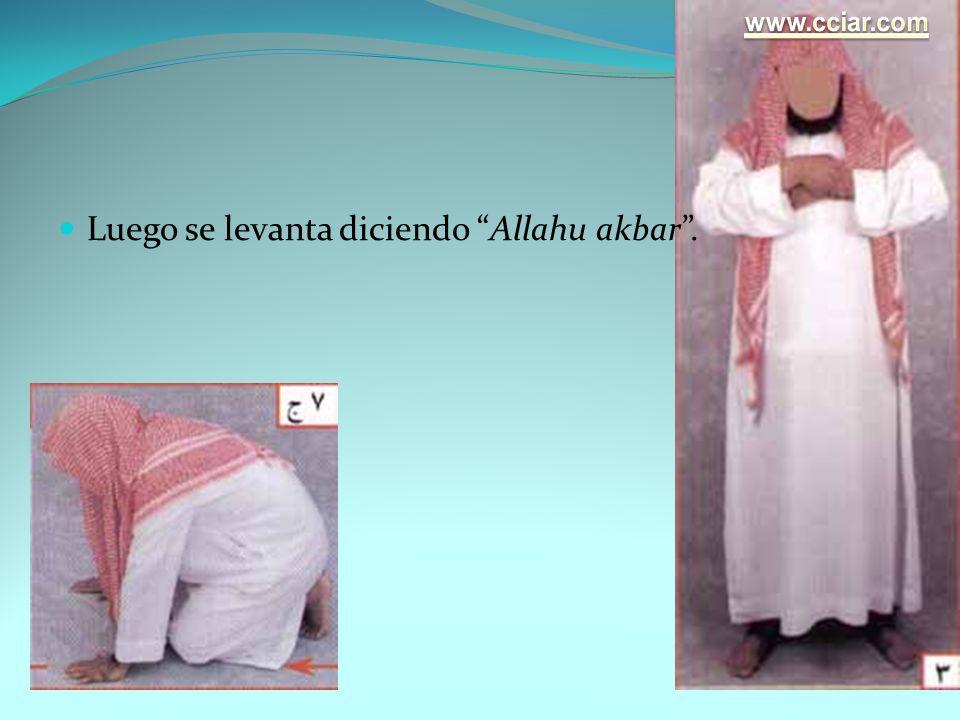Luego se levanta diciendo Allahu akbar.