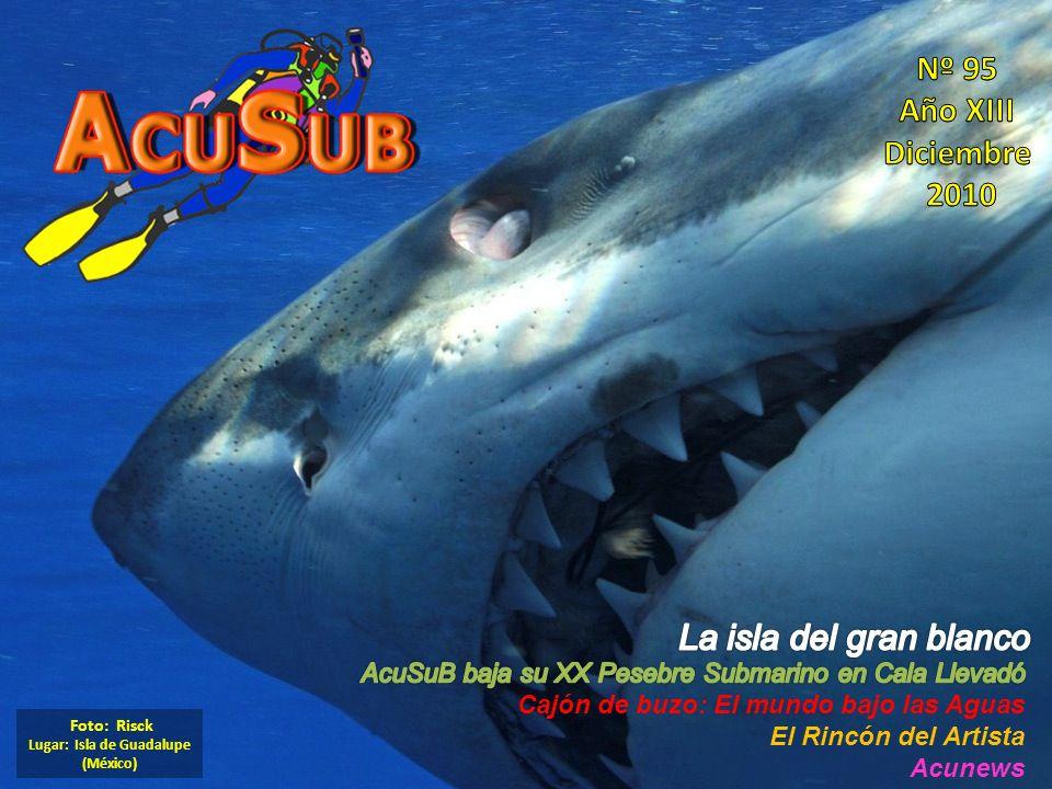 Foto: Risck Lugar: Isla de Guadalupe (México)
