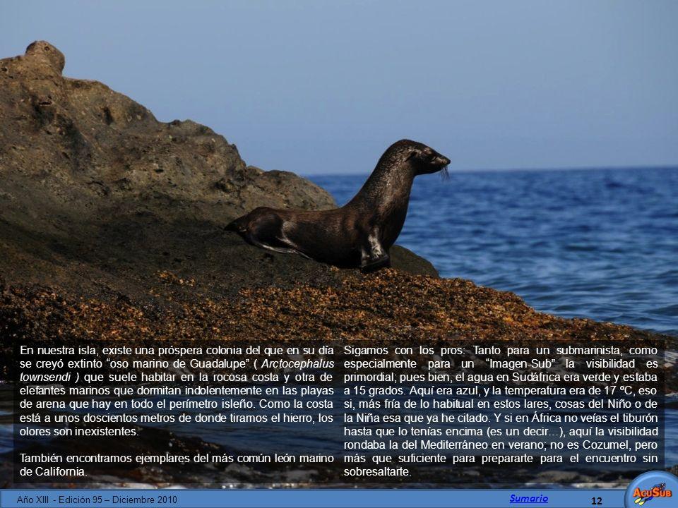 En nuestra isla, existe una próspera colonia del que en su día se creyó extinto oso marino de Guadalupe ( Arctocephalus townsendi ) que suele habitar
