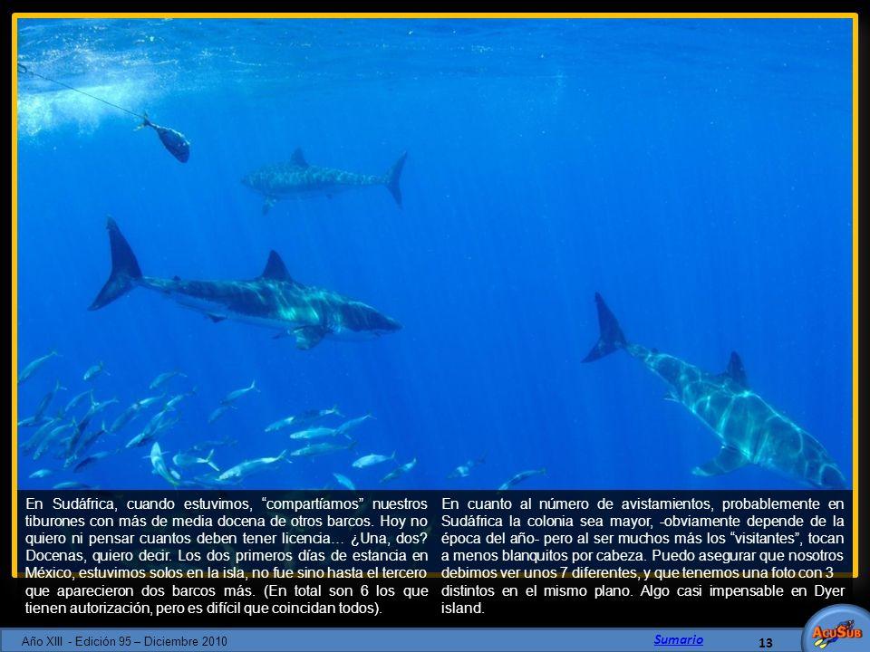 En Sudáfrica, cuando estuvimos, compartíamos nuestros tiburones con más de media docena de otros barcos. Hoy no quiero ni pensar cuantos deben tener l