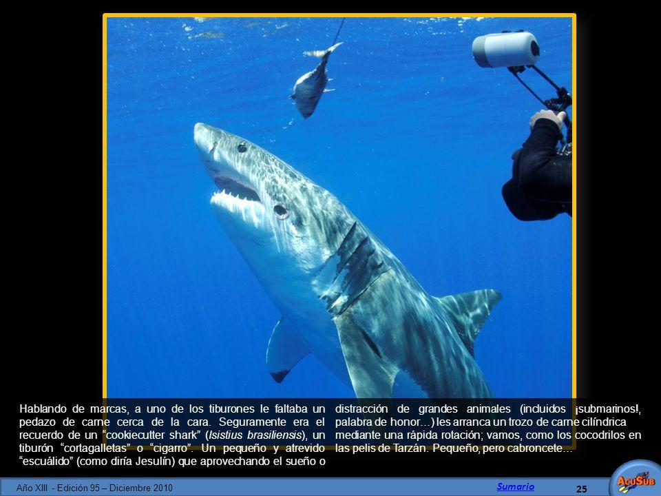 Hablando de marcas, a uno de los tiburones le faltaba un pedazo de carne cerca de la cara. Seguramente era el recuerdo de un cookiecutter shark (Isist