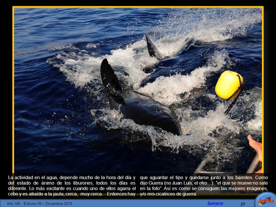 La actividad en el agua, depende mucho de la hora del día y del estado de ánimo de los tiburones, todos los días es diferente. Lo más excitante es cua