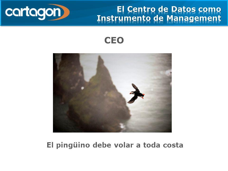 CEO El pingüino debe volar a toda costa
