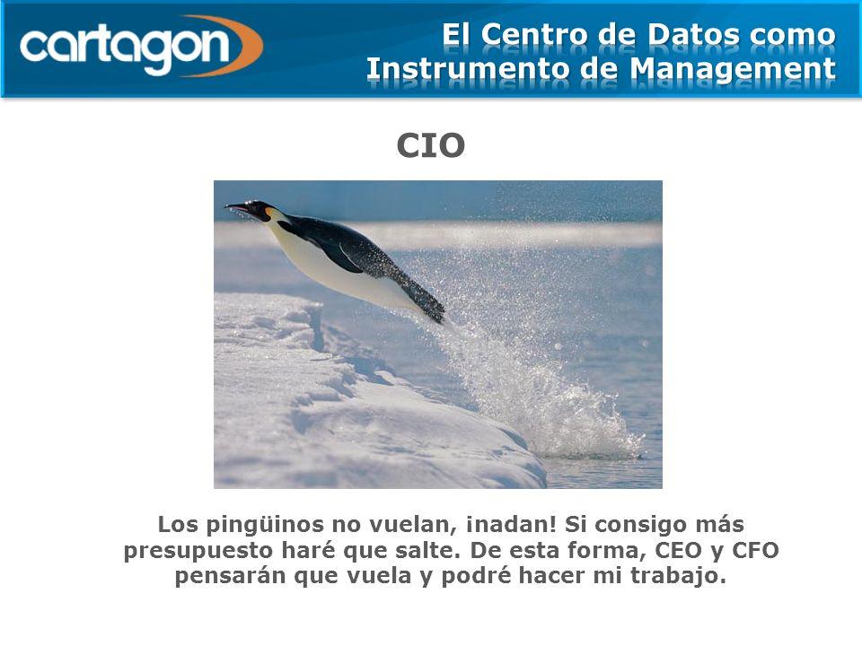 CIO Los pingüinos no vuelan, ¡nadan! Si consigo más presupuesto haré que salte. De esta forma, CEO y CFO pensarán que vuela y podré hacer mi trabajo.