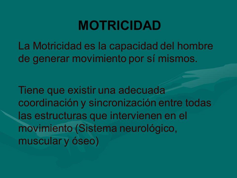 MOTRICIDAD La Motricidad es la capacidad del hombre de generar movimiento por sí mismos. Tiene que existir una adecuada coordinación y sincronización