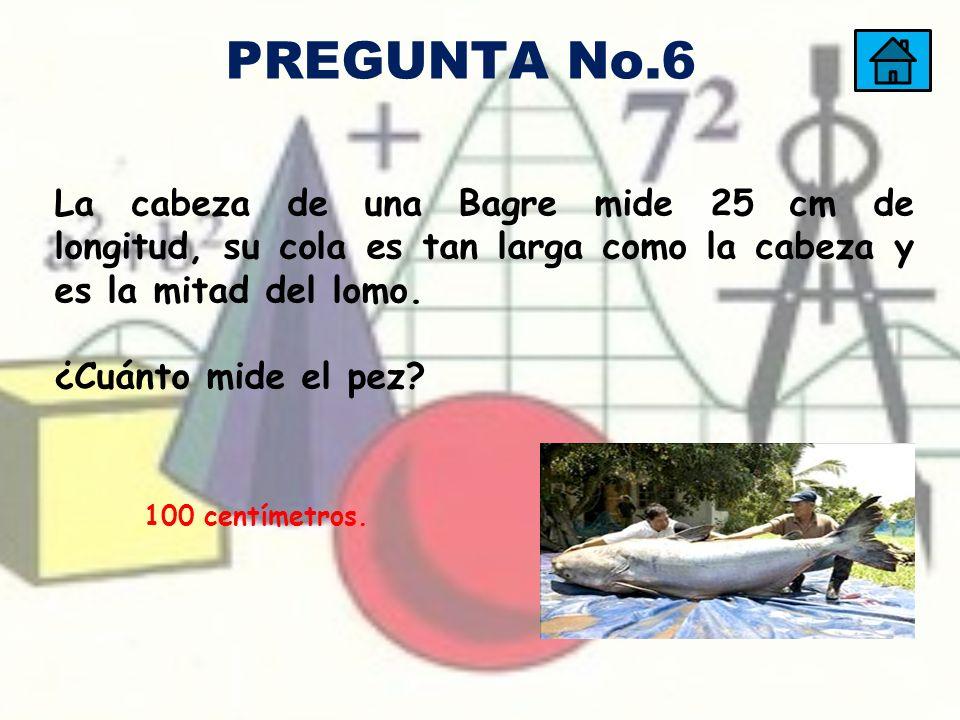100 centímetros. La cabeza de una Bagre mide 25 cm de longitud, su cola es tan larga como la cabeza y es la mitad del lomo. ¿Cuánto mide el pez? PREGU