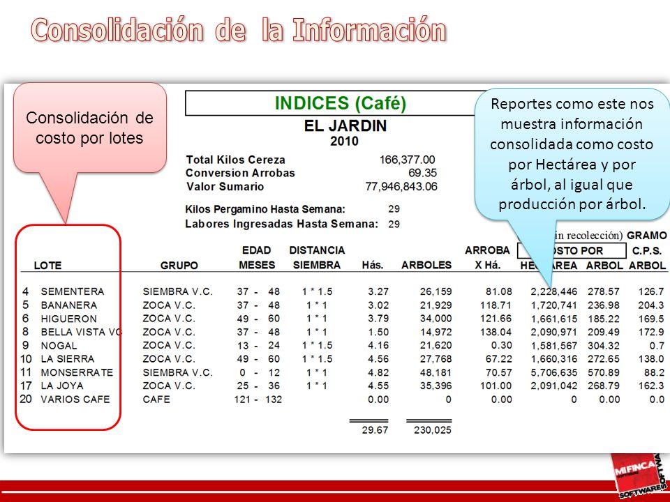 Reportes como este nos muestra información consolidada como costo por Hectárea y por árbol, al igual que producción por árbol.