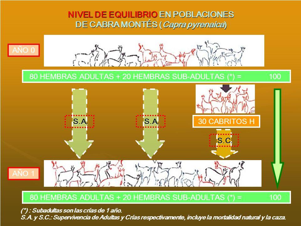 NIVEL DE EQUILIBRIO EN POBLACIONES DE CABRA MONTÉS (Capra pyrenaica) 80 HEMBRAS ADULTAS + 20 HEMBRAS SUB-ADULTAS (*) = 100 30 CABRITOS H S.A. S.A. AÑO