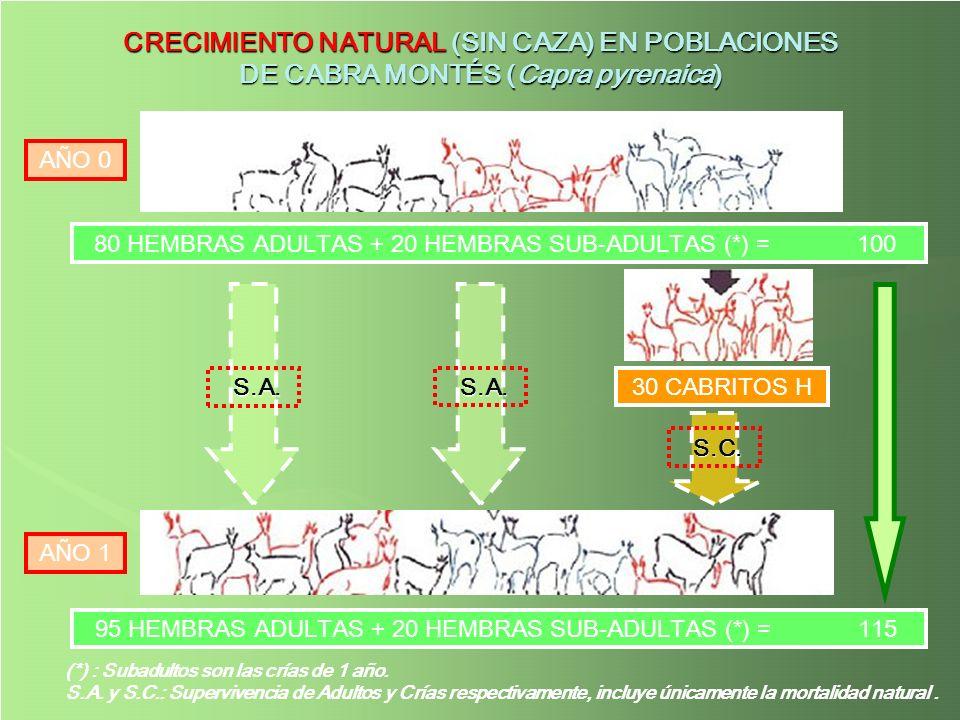 (*) : Subadultos son las crías de 1 año. S.A. y S.C.: Supervivencia de Adultos y Crías respectivamente, incluye únicamente la mortalidad natural. CREC