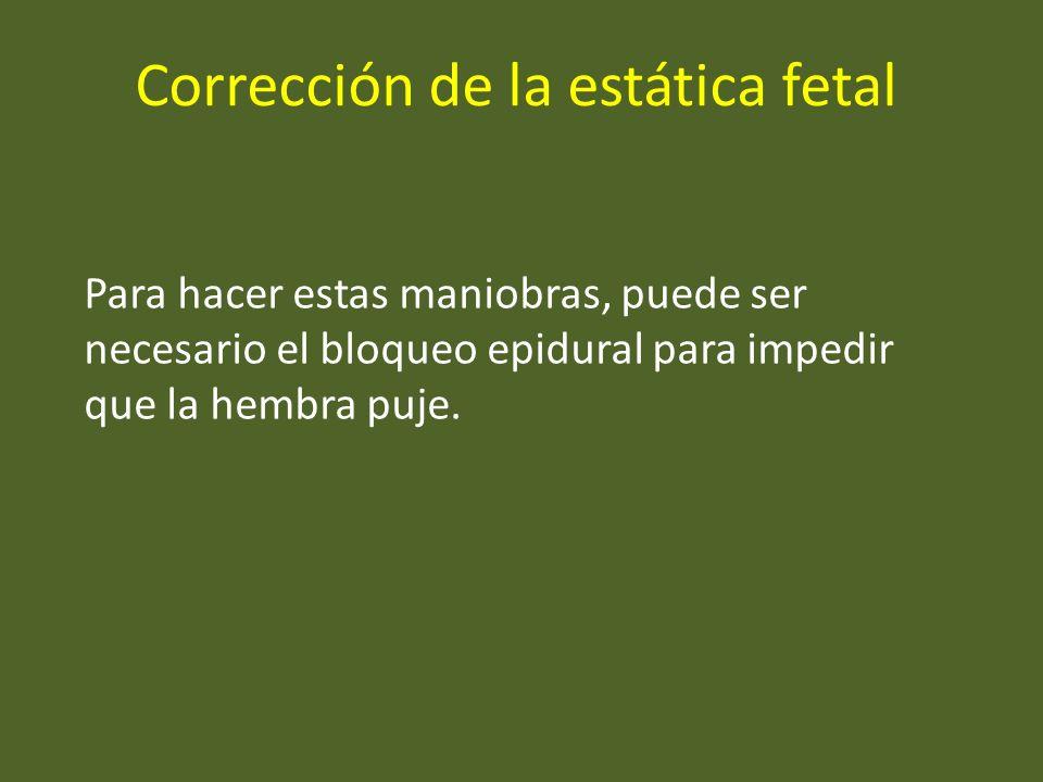Corrección de la estática fetal Para hacer estas maniobras, puede ser necesario el bloqueo epidural para impedir que la hembra puje.