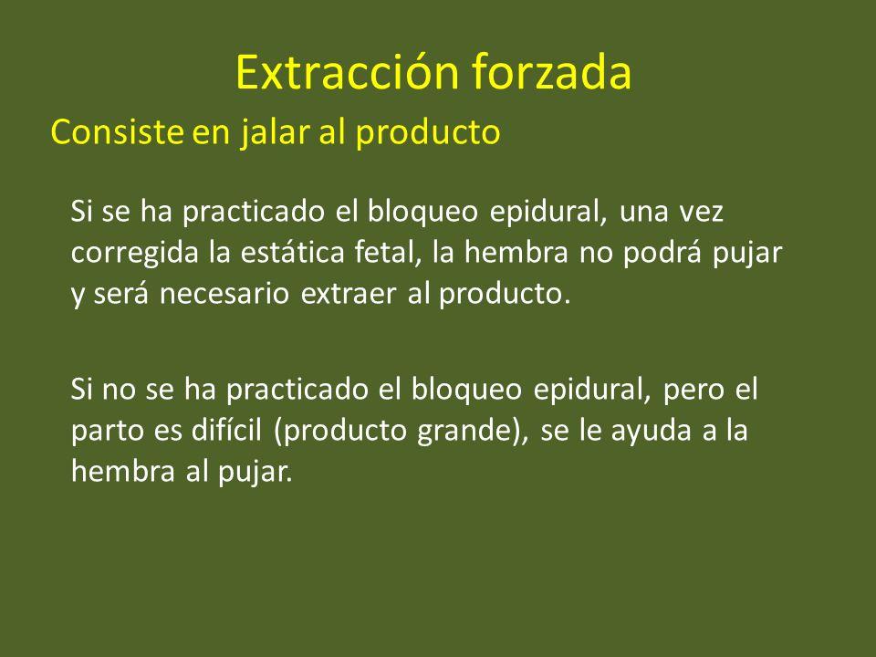 Extracción forzada Consiste en jalar al producto Si se ha practicado el bloqueo epidural, una vez corregida la estática fetal, la hembra no podrá puja