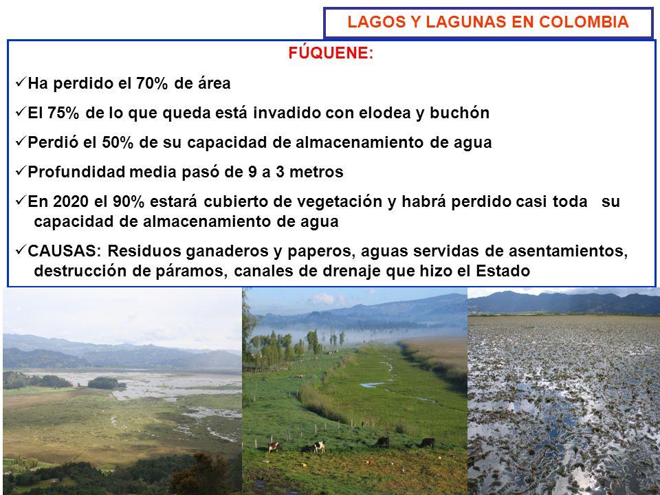 FÚQUENE: Ha perdido el 70% de área El 75% de lo que queda está invadido con elodea y buchón Perdió el 50% de su capacidad de almacenamiento de agua Pr