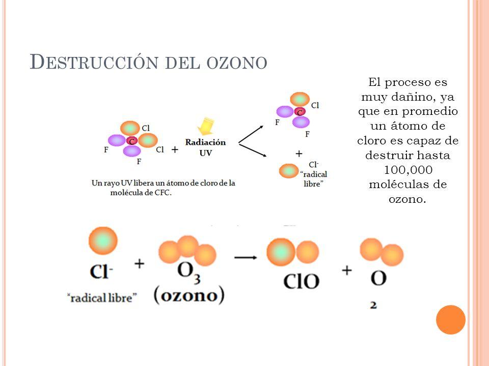 D ESTRUCCIÓN DEL OZONO El proceso es muy dañino, ya que en promedio un átomo de cloro es capaz de destruir hasta 100,000 moléculas de ozono.