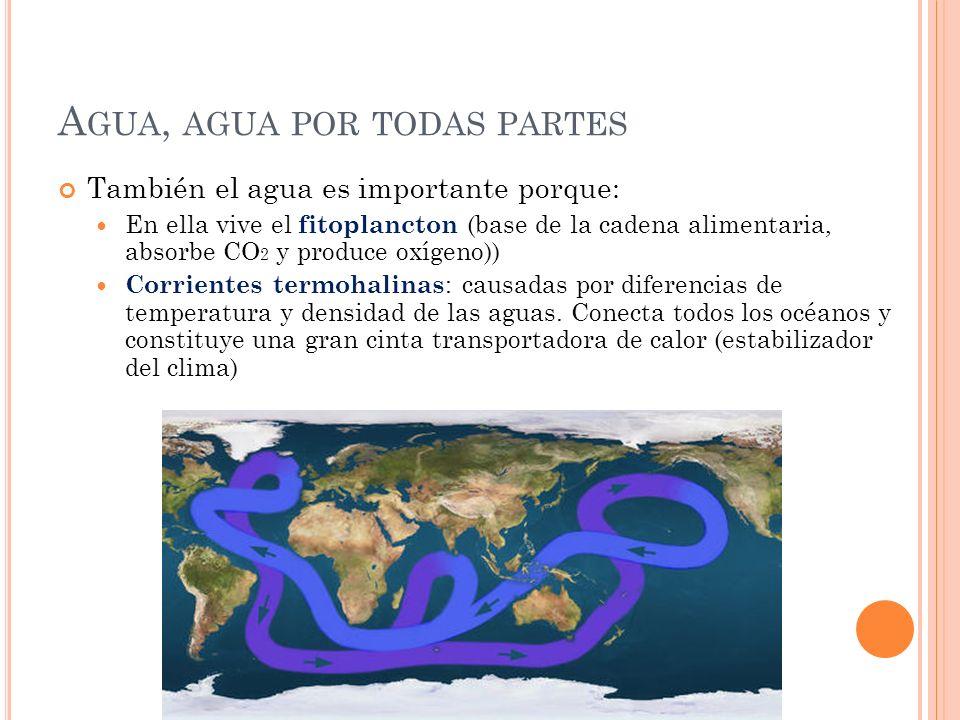 A GUA, AGUA POR TODAS PARTES También el agua es importante porque: En ella vive el fitoplancton (base de la cadena alimentaria, absorbe CO 2 y produce