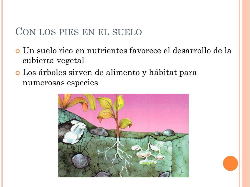 C ON LOS PIES EN EL SUELO Un suelo rico en nutrientes favorece el desarrollo de la cubierta vegetal Los árboles sirven de alimento y hábitat para nume