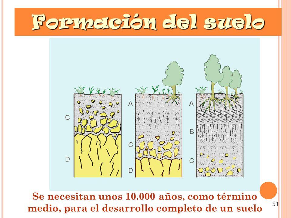 31 Formación del suelo Se necesitan unos 10.000 años, como término medio, para el desarrollo completo de un suelo