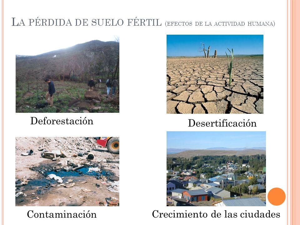 L A PÉRDIDA DE SUELO FÉRTIL ( EFECTOS DE LA ACTIVIDAD HUMANA ) Crecimiento de las ciudades Deforestación Desertificación Contaminación