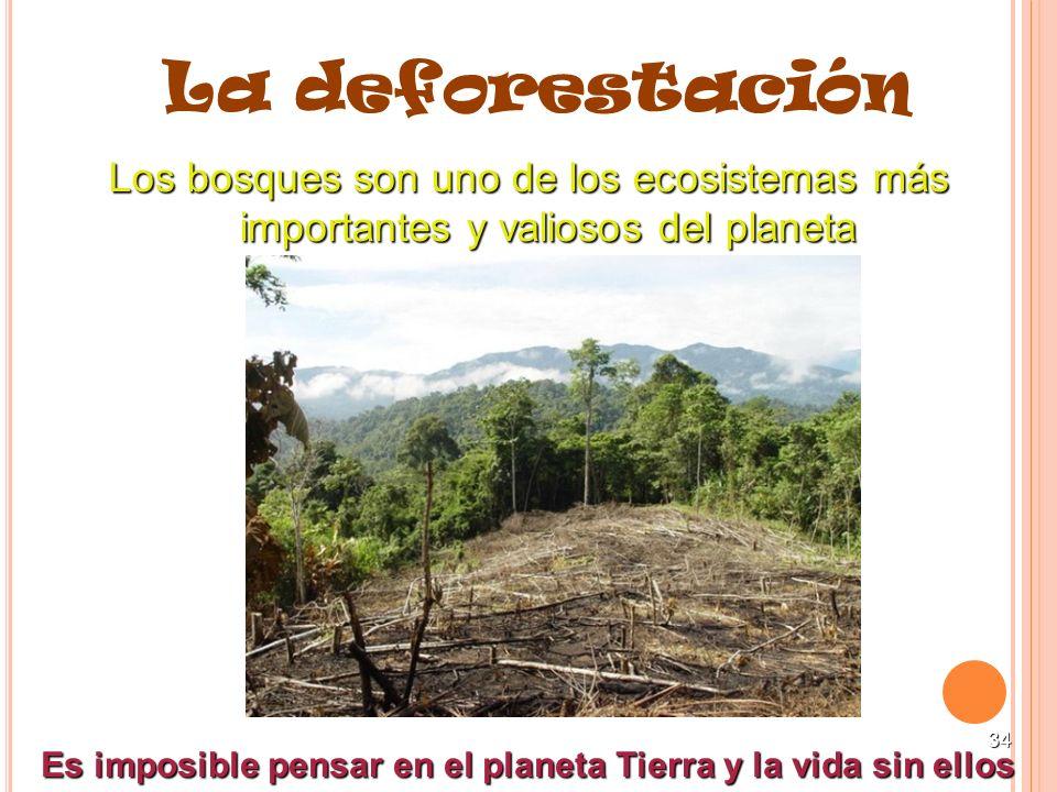 34 La deforestación Los bosques son uno de los ecosistemas más importantes y valiosos del planeta Es imposible pensar en el planeta Tierra y la vida s