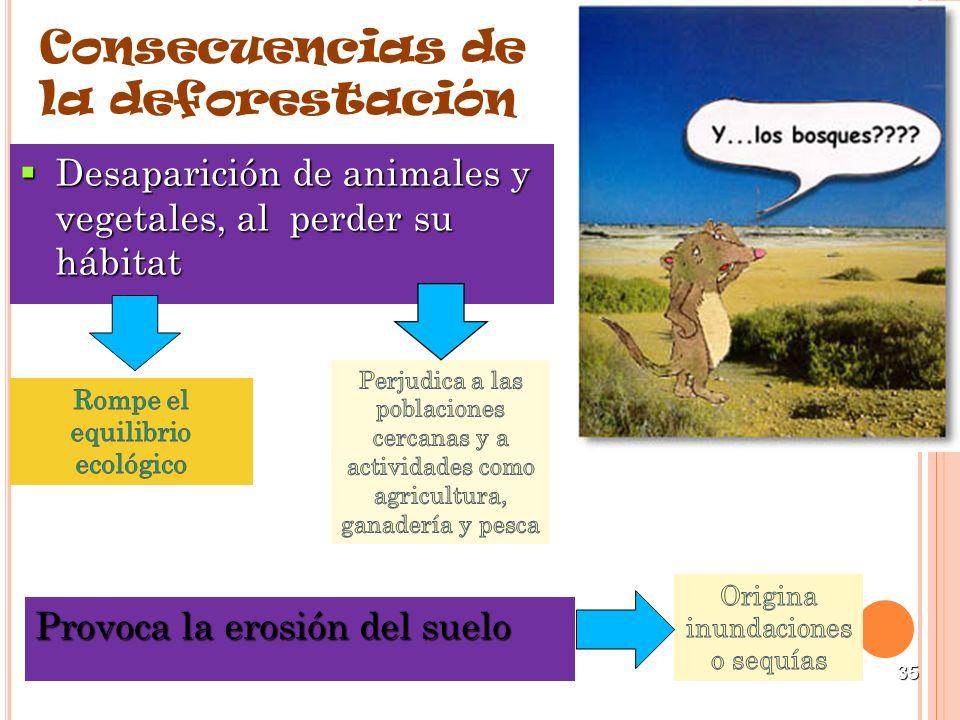 35 Consecuencias de la deforestación Desaparición de animales y vegetales, al perder su hábitat Desaparición de animales y vegetales, al perder su háb