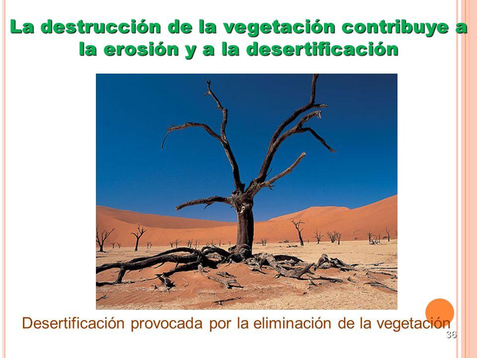 36 La destrucción de la vegetación contribuye a la erosión y a la desertificación Desertificación provocada por la eliminación de la vegetación