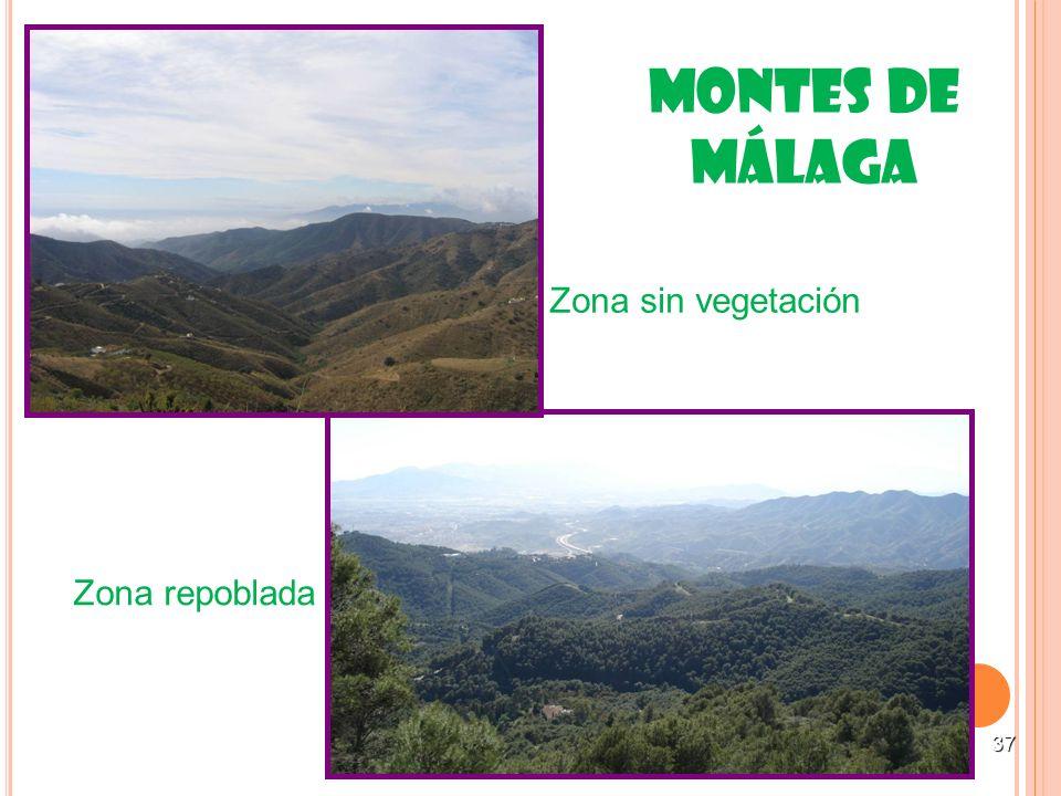 37 Montes de Málaga Zona sin vegetación Zona repoblada