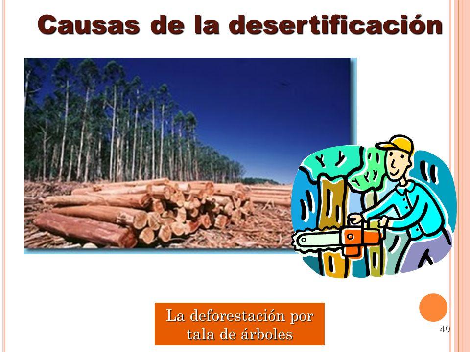40 Causas de la desertificación La deforestación por tala de árboles