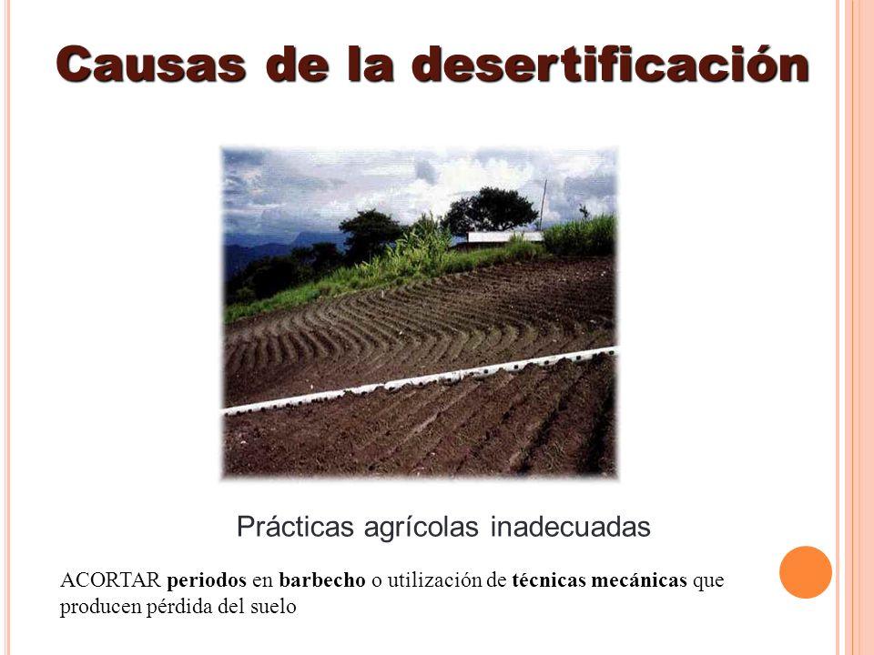 Prácticas agrícolas inadecuadas Causas de la desertificación ACORTAR periodos en barbecho o utilización de técnicas mecánicas que producen pérdida del
